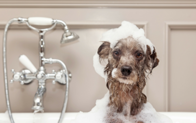 Pet-Friendly Home Features: Home Builders Now Including Pet-Washing Stations and Other Pet-Friendly Options